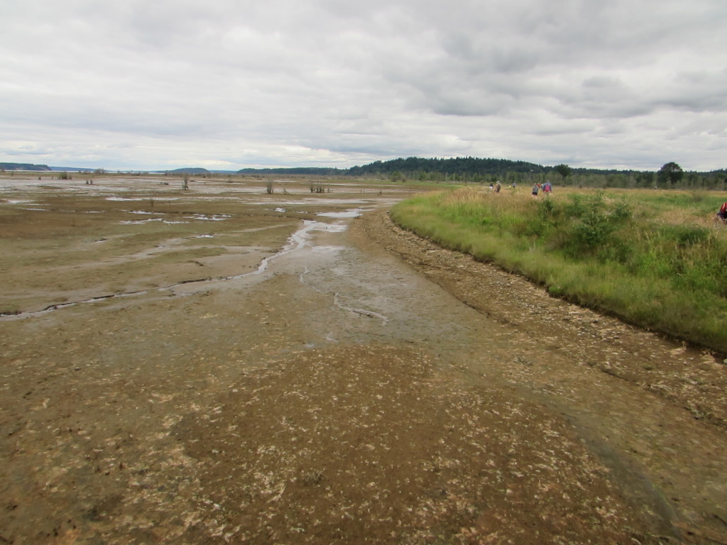 tidal mudflats with remaining road