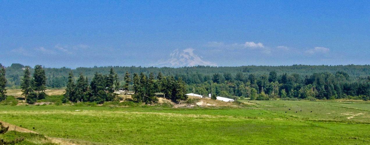 Mount Rainier from Wilcox Family Farms
