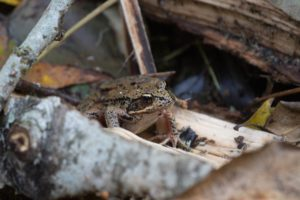 Froggy 3
