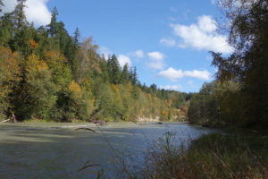 The Nisqually River flows past banks of trees in autumn colors.